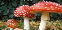 Andiamo a cercar funghi